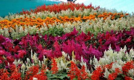 flower valley in uttarakhand