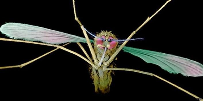 So, this mosquito will prevent malaria2