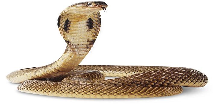 snake.1