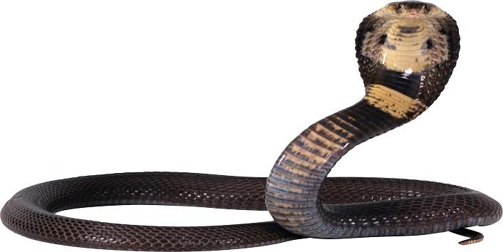 snake.2
