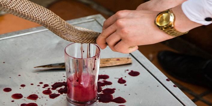 Snake blood drink1