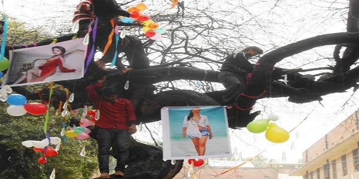 virgin-tree_1455127295