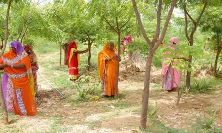 Piplantri village,Rajsamand,India