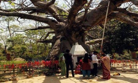 worship-oldest-tree