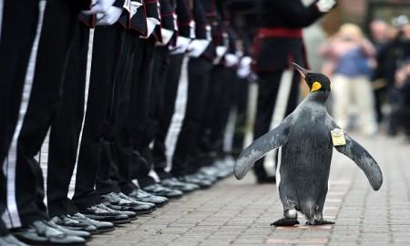 Brigadier-Sir-Nils-Olav