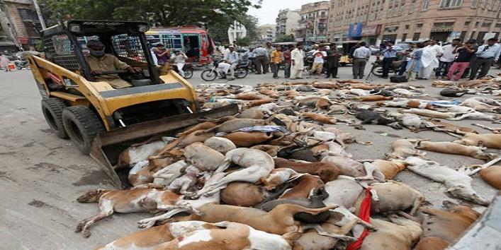 Stray Dog Killings at Pakistan Chowk, Karachi,Pakistan Chowk,Pakistan,Thousands Of Dogs Killed,