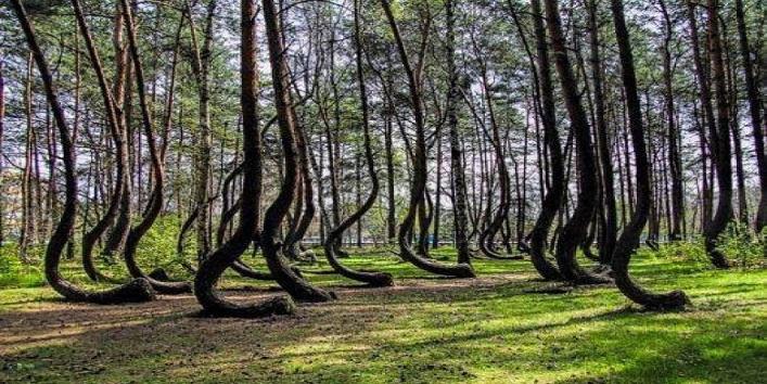 Tree Art3