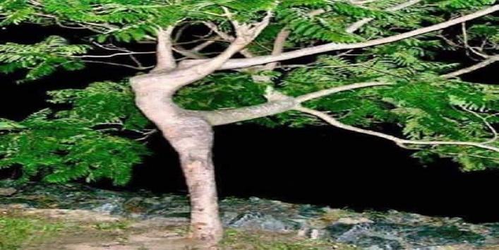 Tree Art6