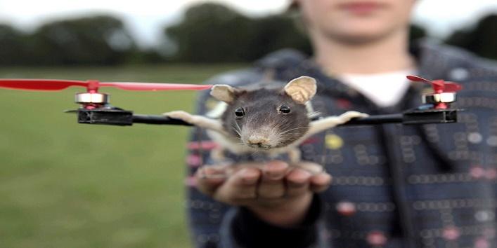 animal-drone1