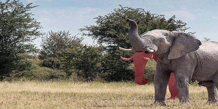 elephant two trunks2