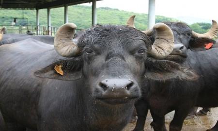 interview of buffalo