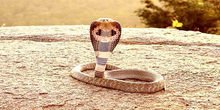 snake-kiss1