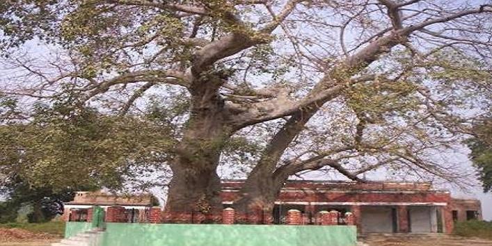banyan-tree-at-punjab1