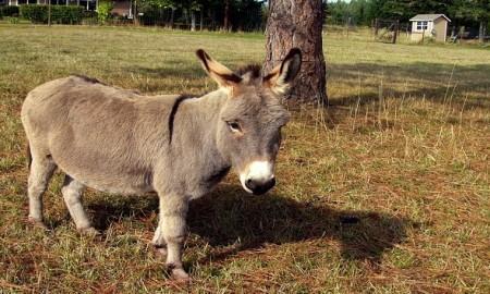 donkey-cover