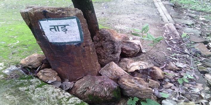 ghughua-fossil-parknational-fossil-park-ghughuamadhya-pradeshdinosaur2