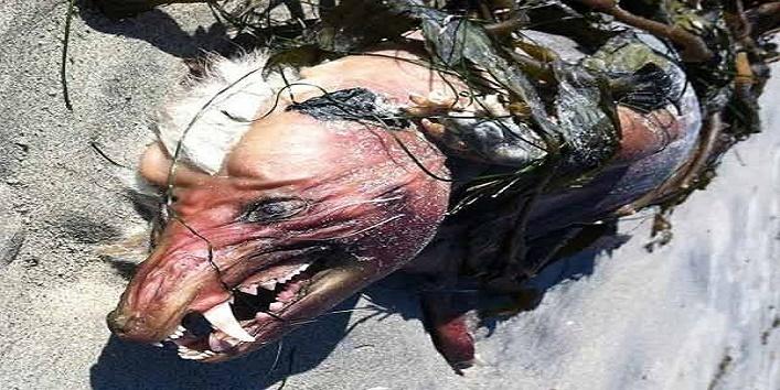 bizarre-monster-animals3