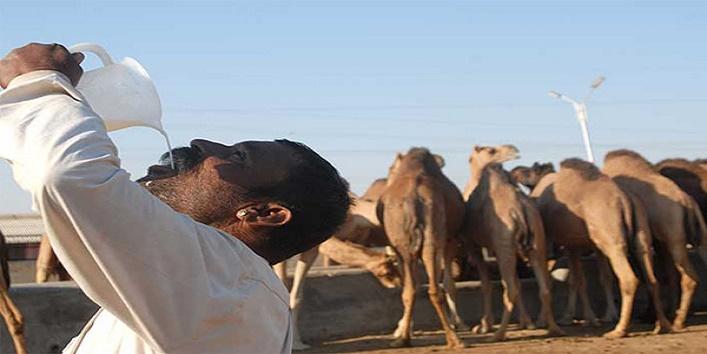 camel-milk1