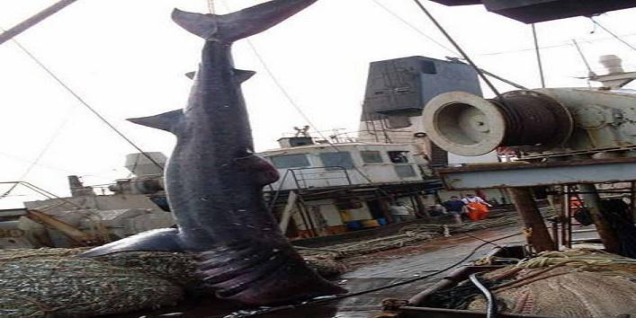 fishing-net-1