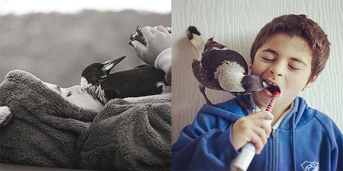 penguin magpie2