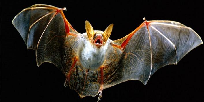 vampire-bats1