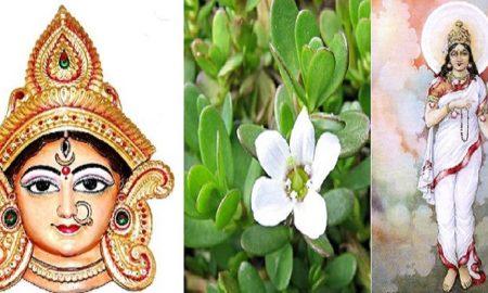 this medicine considered as goddess brahmacharini cover