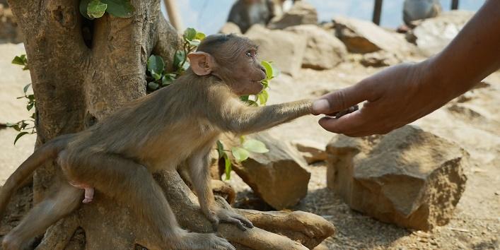 बंदर को बेटे की तरह लिया था गोद