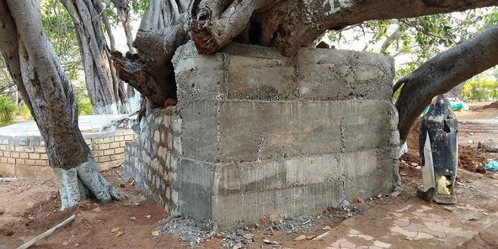 तेलंगाना में है यह पेड़