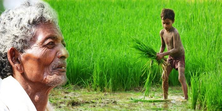 अनुसूचित जाति के 60 फीसदी किसान हैं भूमिहीन