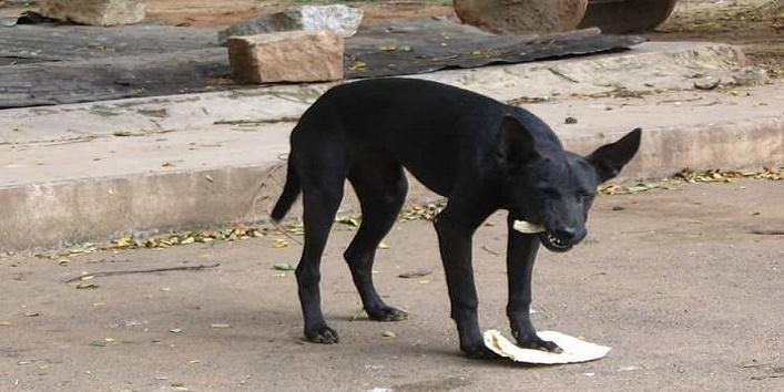 काले कुत्ते को रोटी दें