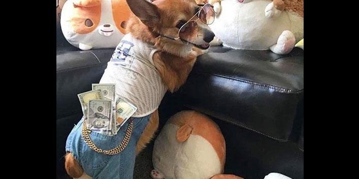 Dogs की ज़िंदगी