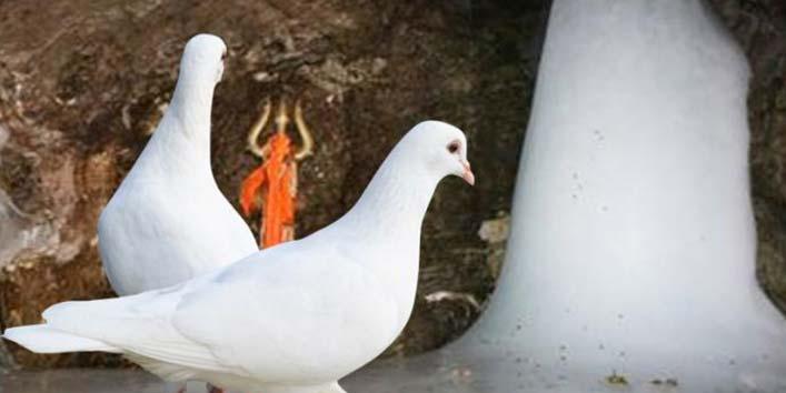 दो कबूतरों ने सुनी अमरत्व की कहानी